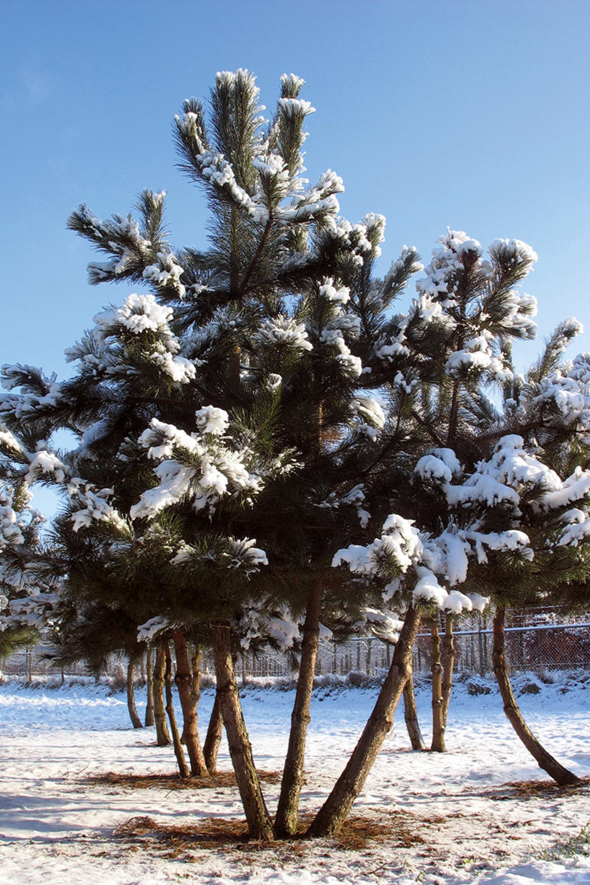 Wide Range Of Trees And Shrubs Ebben Nurseries