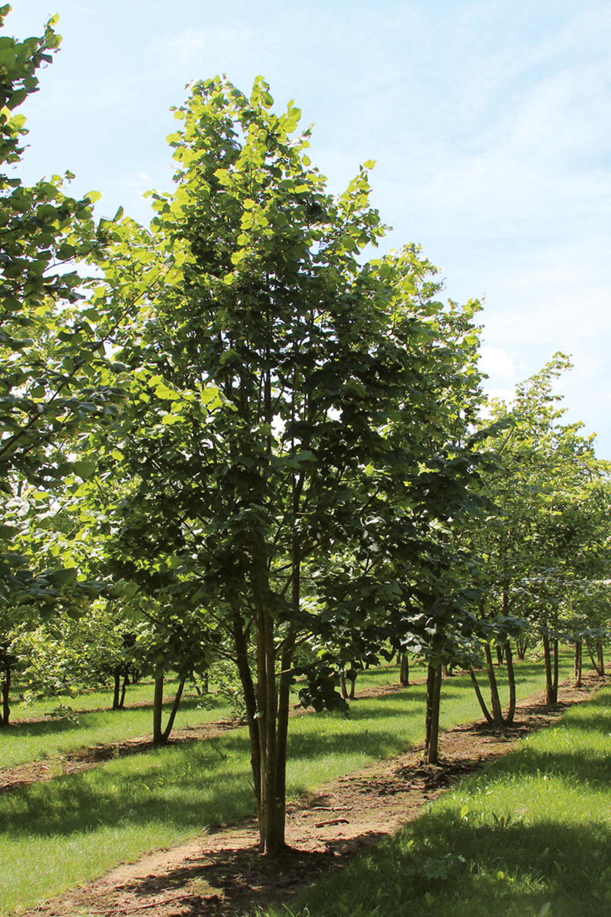 Wide Range Of Trees And Shrubs Ebben Nurseries