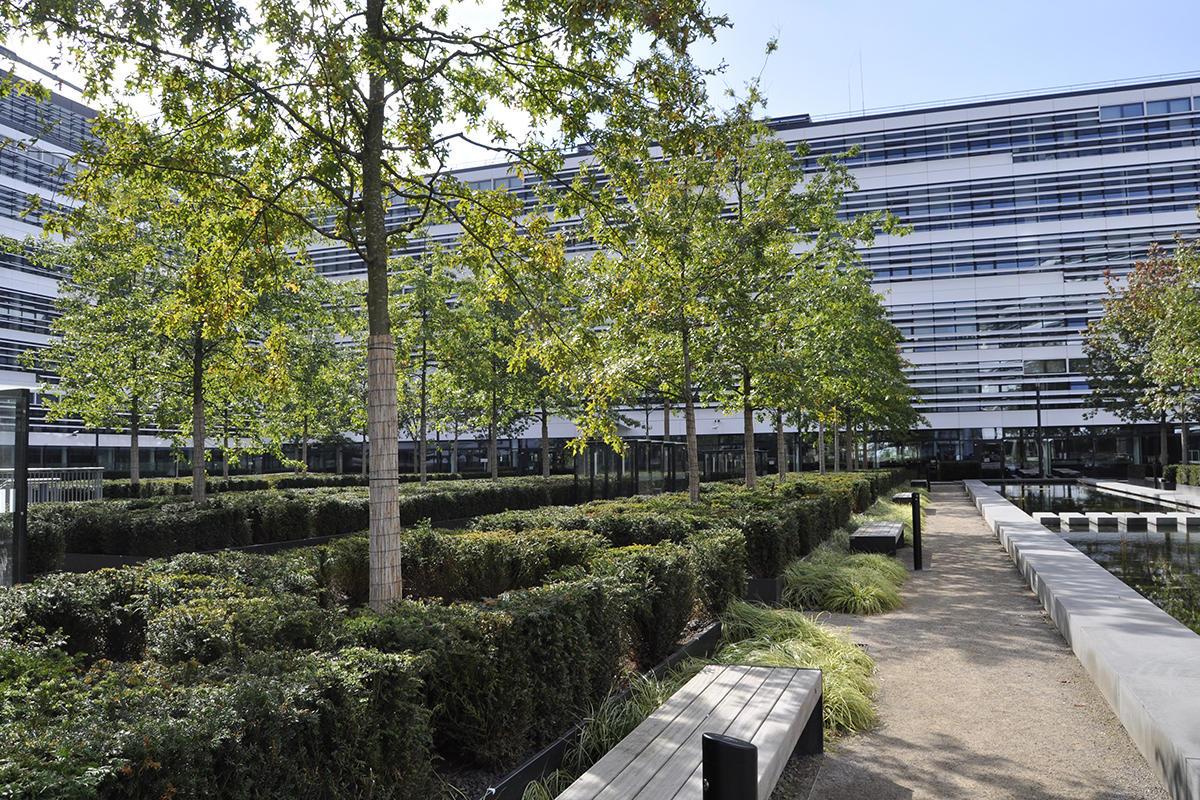 Vodafone Campus D Sseldorf Bomen Voor Pleinen Bomen