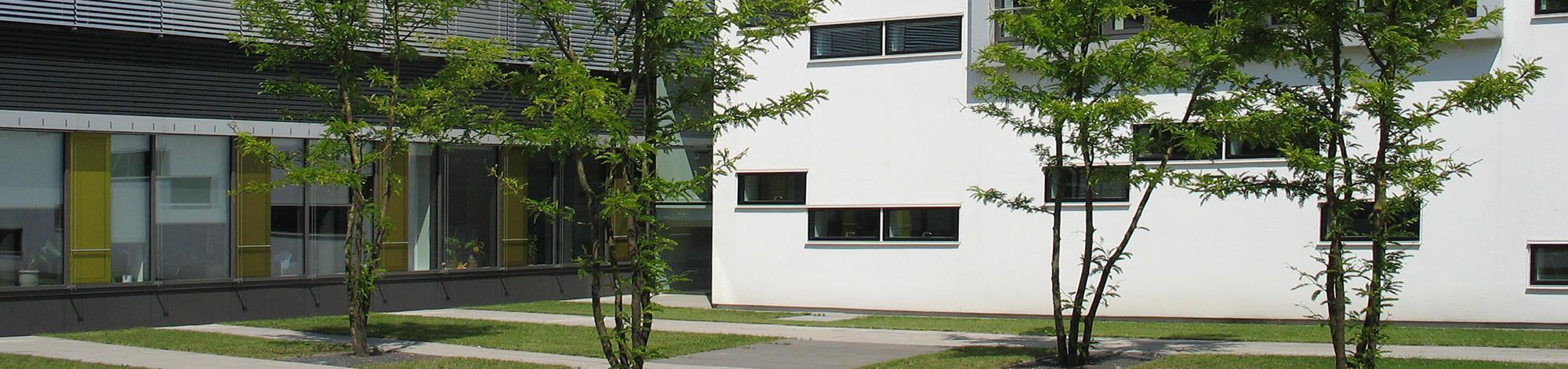 belastingdienst geldern groen rondom gebouwen en instellingen bomen voor groenprojecten. Black Bedroom Furniture Sets. Home Design Ideas