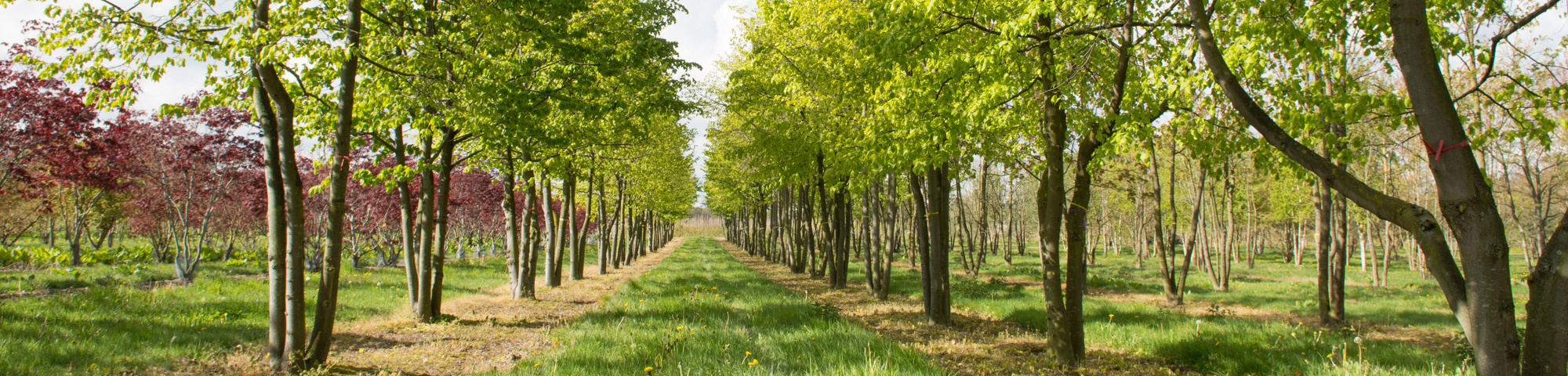 Wide range of characteristic trees and shrubs