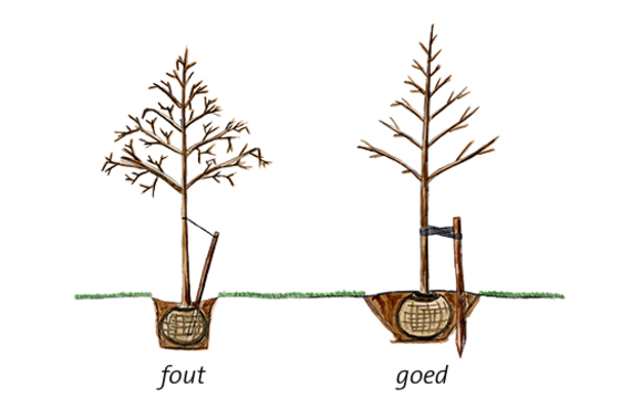 bomen planten bomen planten en beheren boomkwekerij ebben. Black Bedroom Furniture Sets. Home Design Ideas