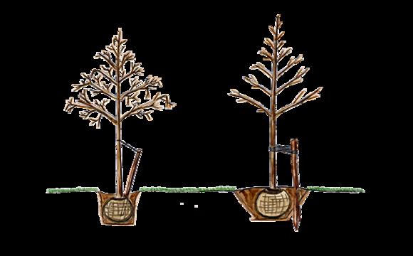 Ogólne warunki sadzenia drzew