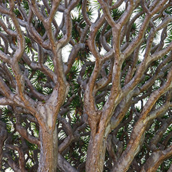 Trees of the world: characteristic appearance with healing powers