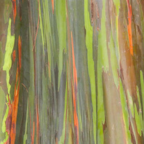 Trees of the world: the most beautiful bark in the world