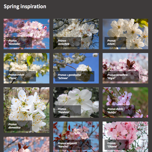 New in the TreeEbb: Compare trees and create mood boards